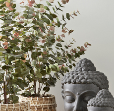 eucalyptus bouddha