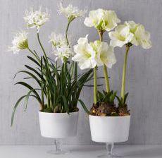 1_22-Lou-de-Castellane-Artificielles-Artificial-Artificiale-Fleurs-Flowers-Fiore-Flor-COUPES-PIED-AMARYLLIS