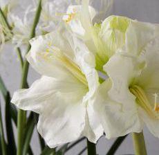 1_23-Lou-de-Castellane-Artificielles-Artificial-Artificiale-Fleurs-Flowers-Fiore-Flor-AMARYLLIS-Zoom