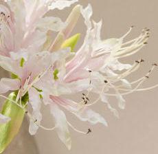 1_28-Lou-de-Castellane-Artificielles-Artificial-Artificiale-Fleurs-Flowers-Fiore-Flor-NERINE