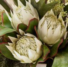 1_29-Lou-de-Castellane-Artificielles-Artificial-Artificiale-Fleurs-Flowers-Fiore-Flor-PROTEA