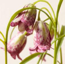 1_34-Lou-de-Castellane-Artificielles-Artificial-Artificiale-Fleurs-Flowers-Fiore-Flor