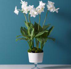 2_05-Lou-de-Castellane-Artificielles-Artificial-Artificiale-Fleurs-Flowers-Fiore-Flor-Coupe-blanche-EUCHARIS
