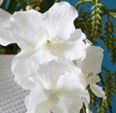 2_07-Lou-de-Castellane-Artificielles-Artificial-Artificiale-Fleurs-Flowers-Fiore-Flor-VANDA-BLANC-Zoom