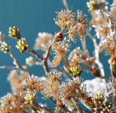 2_15-Lou-de-Castellane-Artificielles-Artificial-Artificiale-Fleurs-Flowers-Fiore-Flor-BRANCHES-SCINTILLANTES
