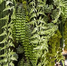 mur vegetal