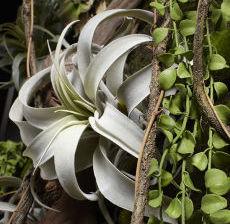37-Lou-de-Castellane-Artificielles-Artificial-Artificiale-Fleurs-Flowers-Fiore-Flor