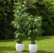 3_01-Lou-de-Castellane-Artificielles-Artificial-Artificiale-Fleurs-Flowers-Fiore-Flor-BAMBOU-ROYAL