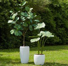 caches pots blancs arbres