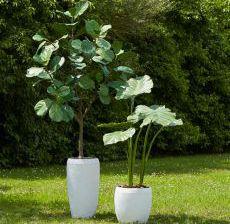 3_08-Lou-de-Castellane-Artificielles-Artificial-Artificiale-Fleurs-Flowers-Fiore-Flor-ALOCASIA-ROYAL-FICUS-LYRATA