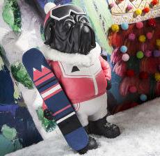 Korb-Modern-design-Tendencia-Tendenza-Bulldog-skieur-mountain-surfer-perro-esquiador-cane-surfista-montagne-fun-gallery