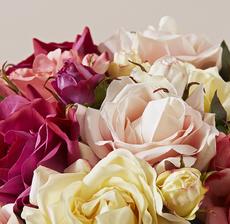 multi roses zoom