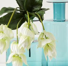 vase cobalt medinella