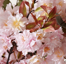 zoom cerisier