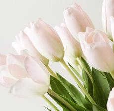 zoom tulip